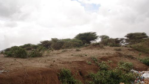 Bushy landscape around Boorama