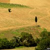 Lone Cypress (Osvaldo_Zoom) Tags: tree field rural landscape nikon lone cypress agriculture marche landart macerata d80 montesangiusto