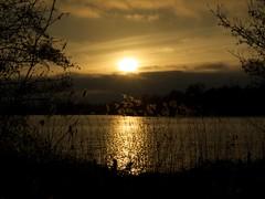 Icelandic ash sunset piccardthofplas groningen 2