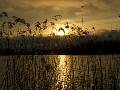 Icelandic ash sunset piccardthofplas groningen 4