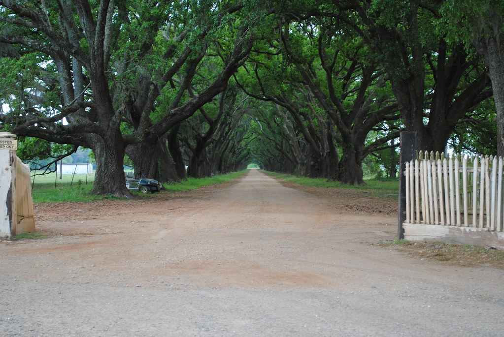 oak alley near evergreen plantation