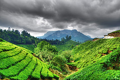 Munnar (matey_88 ( OFF )) Tags: trip sky india holiday mountains gardens clouds nikon tea fields majid incredible matey mohamed munnar d700 theunforgettablepictures