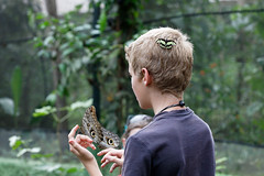 baudchon-baluchon-mindo-papillons-30