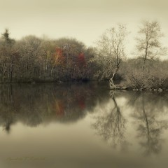 A Hint Of Autumn In Spring (Ronaldo F Cabuhat) Tags: life travel trees light shadow vacation lake inspiration ny newyork reflection art nature water monochrome beautiful beauty silhouette sepia composition forest season landscape photography photo fishing pond scenery soft exposure day quiet peace seasons view image cloudy details smooth arts dream picture tranquility scene creation vision photograph jungle silence imagination sight moment tones squarecrop picnik waterreflection tranquilty canoneos50d pinoykodakero cabuhat canoneos1755mmf28isusm corelpaintshopprox3 autumnfragments shakerslake