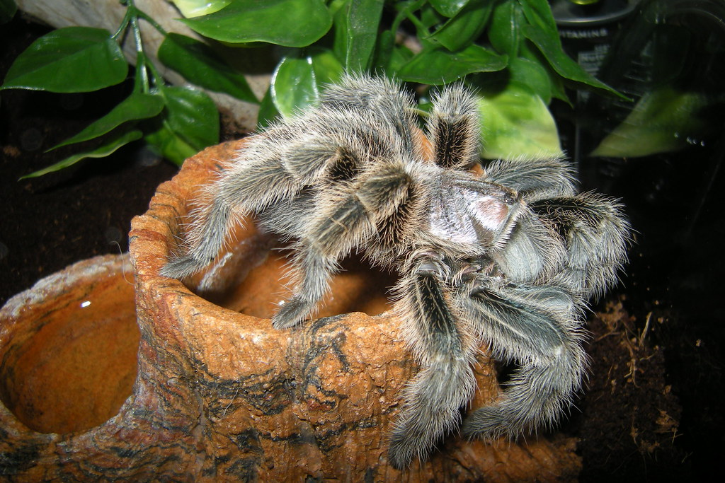 The World S Most Recently Posted Photos Of Tarantula And Terrarium