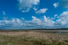 Cley marsh
