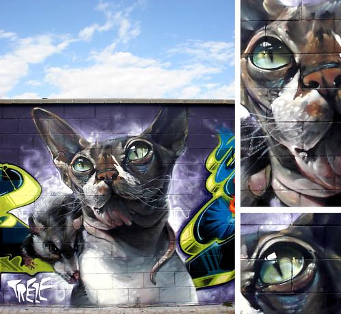 Cats&Rats