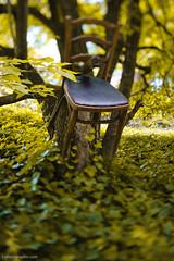 Chair-0046-20100516 (T. Scott Carlisle) Tags: stilllife birmingham chair tsc woodchair bhm tiltshift 45mm28pce tphotographiccom tscottcarlisle
