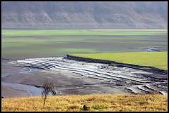 Lifecycle (Deepak Kul) Tags: summer india golden dam dried plains corbett canon100400 oldnew corbettnationalpark freshgrass canoneos40d deepakkulkarni dikhala