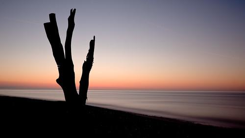 フリー写真素材, 自然・風景, 樹木, 海, ビーチ・砂浜, 朝日・朝焼け・日の出, イギリス, イングランド,