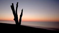 [フリー画像] 自然・風景, 樹木, 海, ビーチ・砂浜, 朝日・朝焼け・日の出, イギリス, イングランド, 201005291900