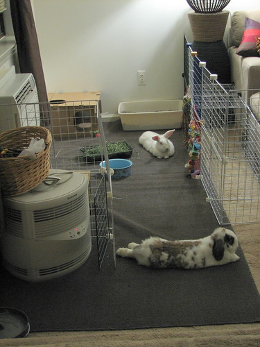 buns lounging in their freshly cleaned area