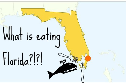 Florida According to Google Analytics