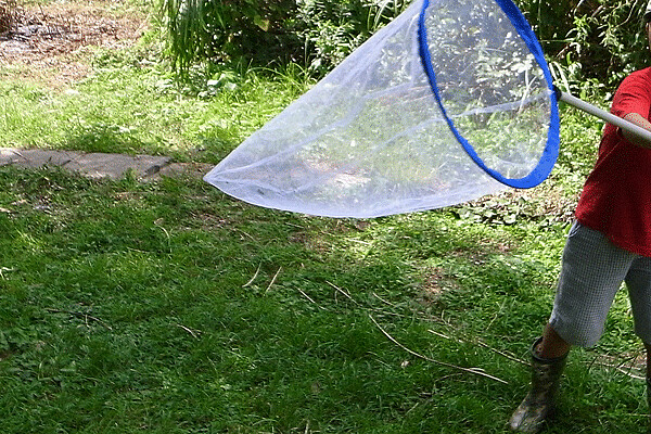 虫とり網の使い方
