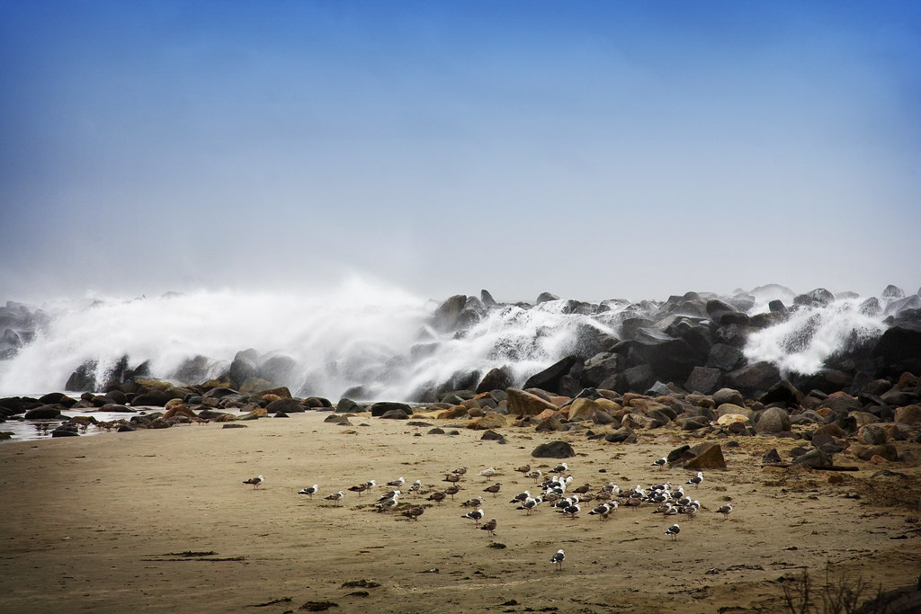 Seagulls and rocks