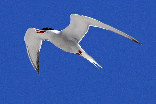 tern flight