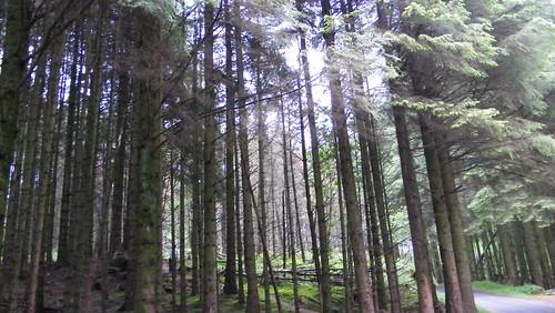 Forest-Original