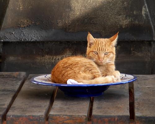 [フリー画像] 動物, 哺乳類, ネコ科, 猫・ネコ, 201006111900