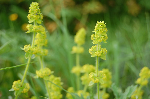Crosswort