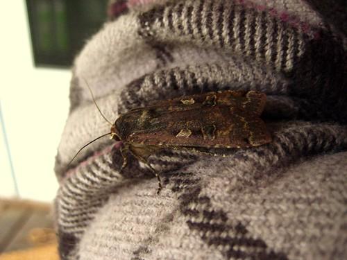 2010-06-04 moth 001