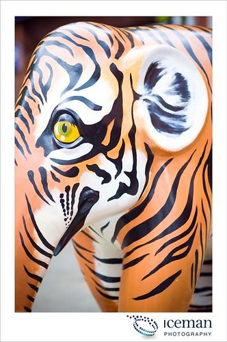 092-Tigerphant