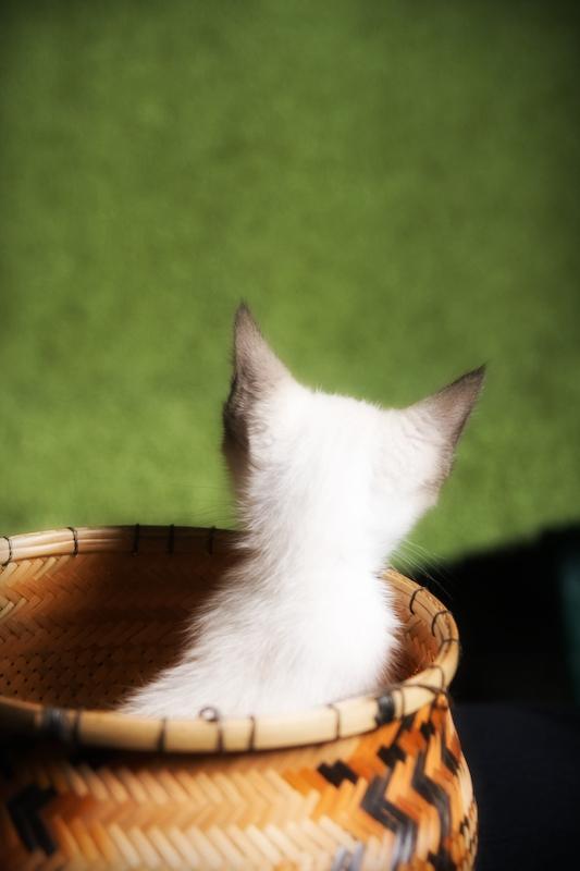 Mi mas reciente proyecto: Cacri foto mascotas