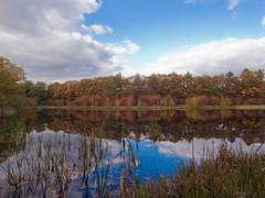 Autumn feeling (Jos Mecklenfeld) Tags: autumn sky orange lake fall nature water forest walking bomen meer wandelen herfst natuur wolken groningen bos ricoh oranje luchten westerwolde gx200 jipsingboertange ricohgx200