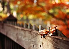 Fall, finally. {Explored} (eRachel11) Tags: autumn red orange fall fence nikon alabama fences fencing friday oakmountainstatepark d7000 nikond7000 happyfencefenchfriday