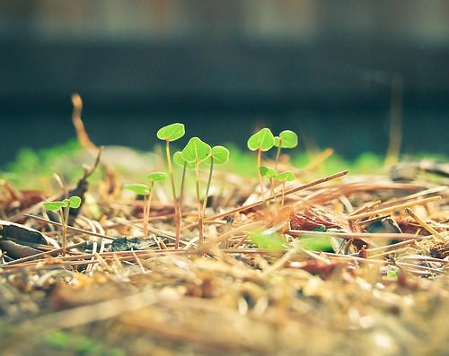 Creciendo