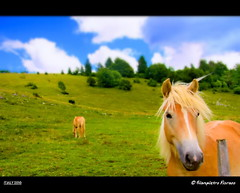 CAVALLI ...... (FIORASO GIAMPIETRO ITALY....) Tags: travel horses italy animals canon landscapes italia colori asiago montagna cavalli viaggio animali vacanza vacanze masterpiece italiani veneto greatphoto naturesfinest ladscapes supershot flickrsbest fioraso kartpostal canoneos50d worldbest canon50d colorphotoaward goldcollection holidaysvacanzeurlaub trescheconca viagginelmondo goldstaraward natureselegantshots vosplusbellesphotos absolutegoldenmasterpiece savebeautifulearth scattifotografici fiorasogiampietro updatecollection platinumbestshot bestcapturesaoi theoriginalgoldseal