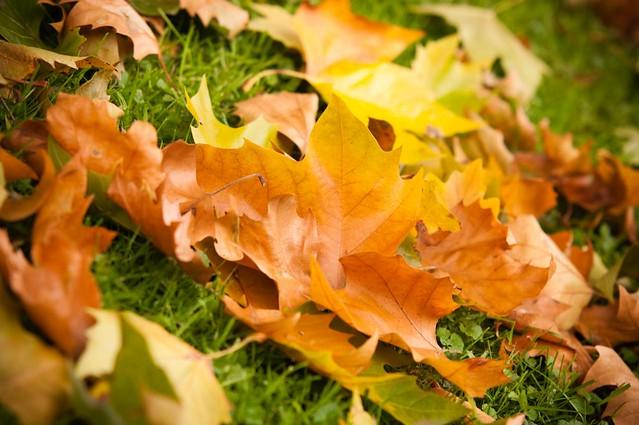 C'est l'automne #1