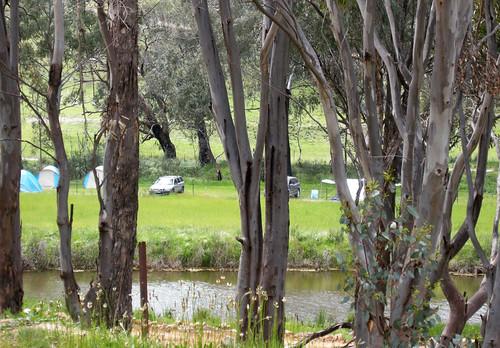 Camping at Milkwood