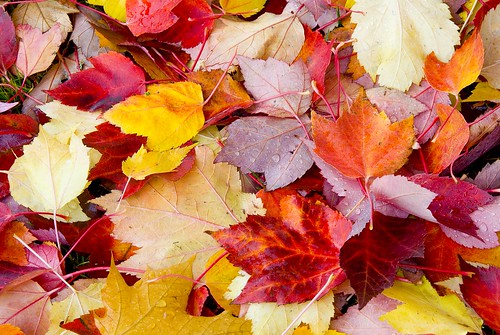 Learn how to recycle leaves