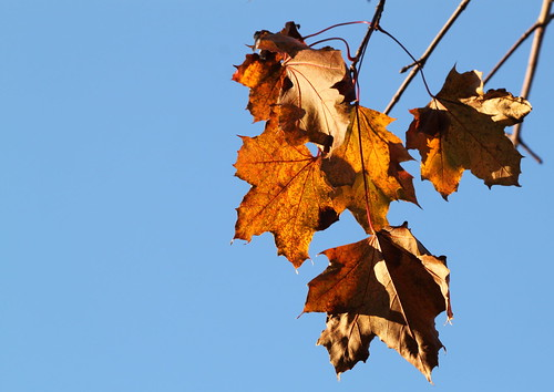 45/52: solitary leaves