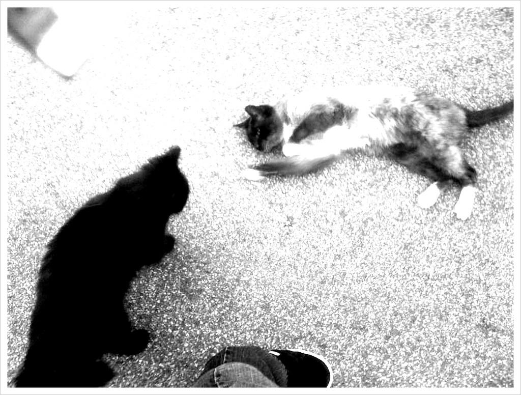 cat attack 4