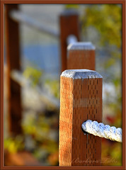 Rope Fence -  Dover Bay Edition (Explored) (misst.shs) Tags: wood autumn sunlight fall fence post rope explore northidaho d90 nikno explored doverbay ~~fencefriday~~