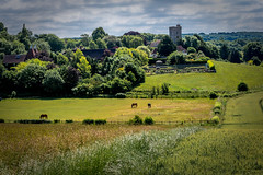 The Kent countryside (Tony_Brasier) Tags: grass green bluesky church horse house hot walking fields fun nikon faversham kent england boughton 50mm farm flickr lovely location d7200 dogs