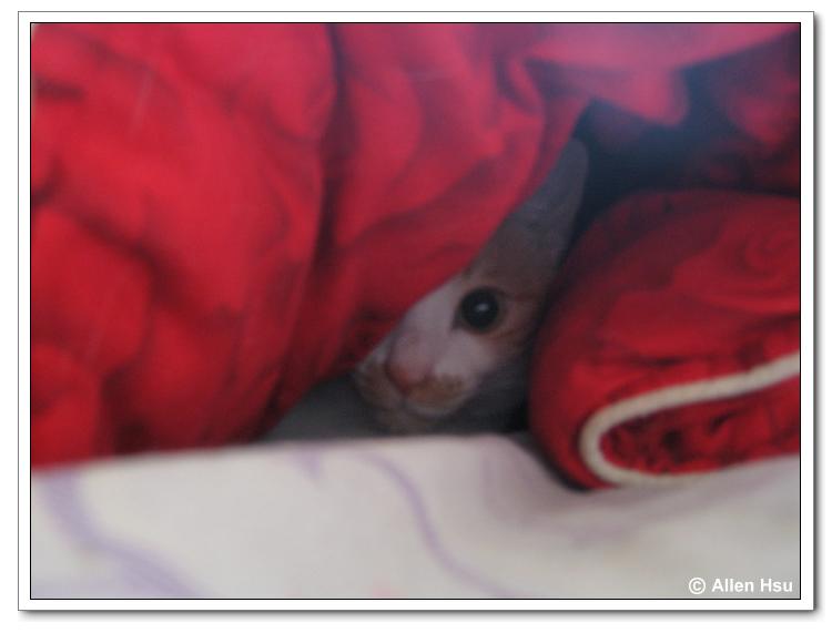 Cat - QQ