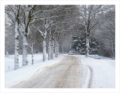 Snow in Drunen . (Franc Le Blanc .) Tags: trees winter snow lumix panasonic drunen dmcfz18 hogeschijf