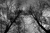 Februar (pixel-rausch) Tags: trees blackandwhite forest calendarshot