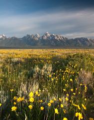 Grand Teton Wildflowers (mikewheels) Tags: park mountains flower landscape grand national teton wildflower mikewheels