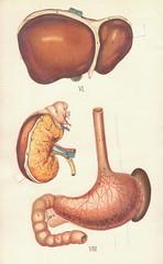 atlas anatomie 8