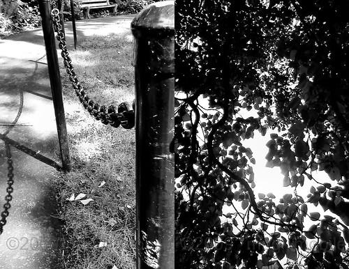17black&whitedaylight