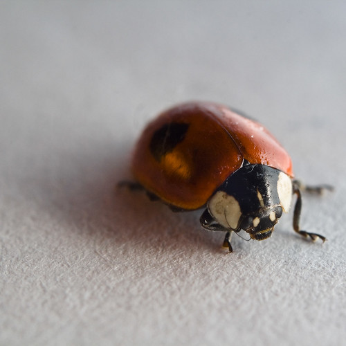 Ladybird on Paper