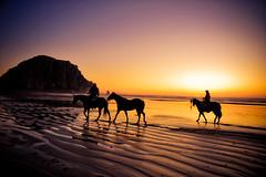[フリー画像] [自然風景] [ビーチ/海辺] [夕日/夕焼け/夕暮れ] [モロベイ] [アメリカ風景] [馬/ウマ]     [フリー素材]
