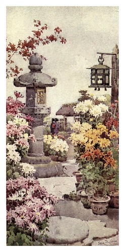 026- Un jardin de crisantemos-The flowers and gardens of Japan (1908)-  Ella Du Cane