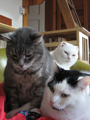 Three cats sitting in a green chair. Mr Shadow, a grey tabby, and Loki, a white cat with black splotches, are in the foreground. In the background, the head of Mr. Bell, a white cat with a grey smudge on his head, can be seen.