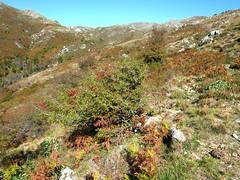 Sentier du ruisseau de San Petru : la vallée du San Petru et ses couleurs automnales