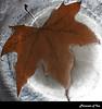 Prisoner of Ice. (Satana737 撒旦.) Tags: beautiful foglia acqua inverno riflessi metz diavolo rulez ghiaccio emozione eos450d canonefs60mmf28macrousm canoneos450d satana737 fotografiditorinoeprovincia