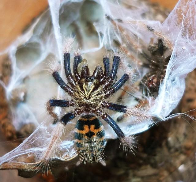 Las arañas tambien son bellas 4314906944_345ede64fb_z